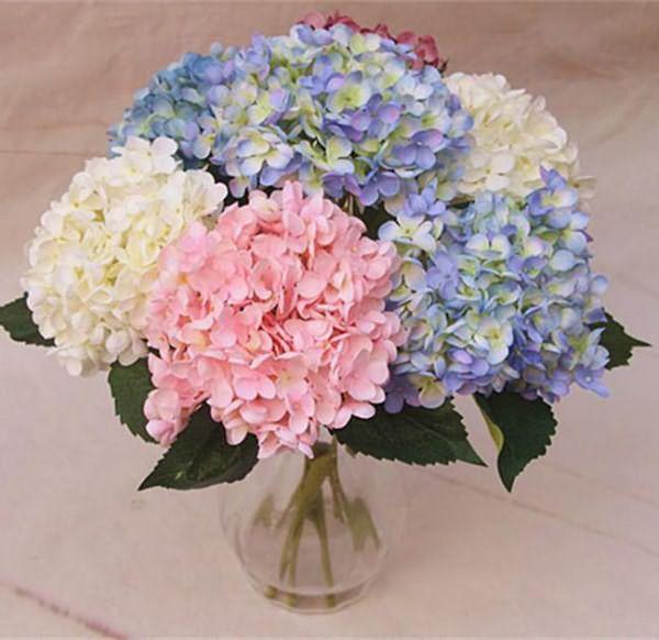 Цветок вероника фото и описание